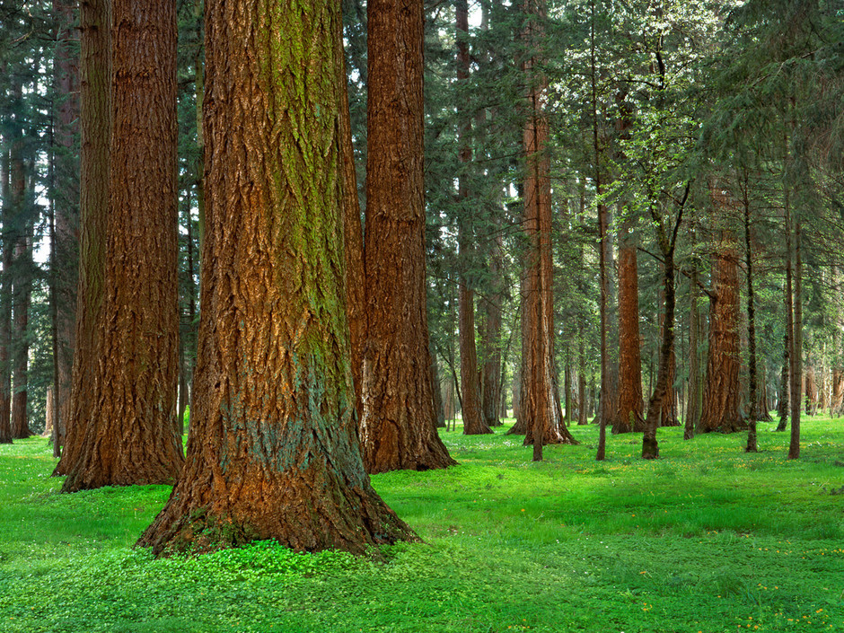 La taille des arbres physique de tous les jours - Reconnaitre les arbres par leur tronc ...