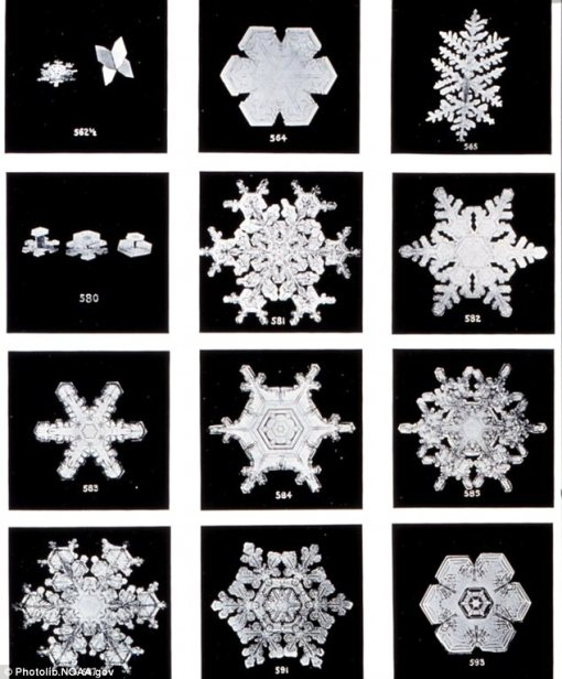 Wilson A. Bentley Snowflakes